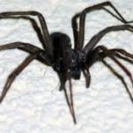 ... but truly had the BIGGEST spiders in the world .... yuk!!